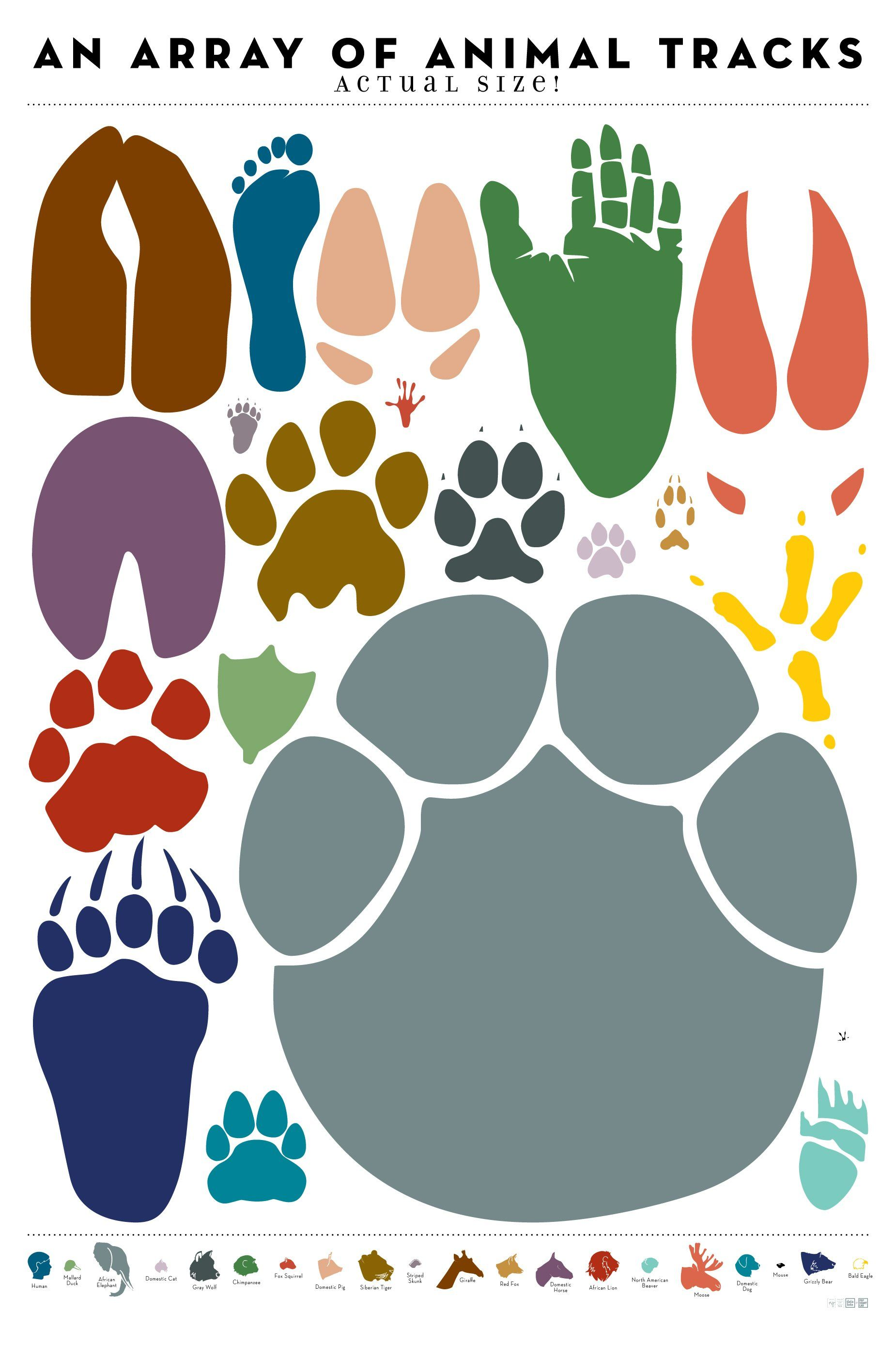 An Array Of Animal Tracks Actual Size