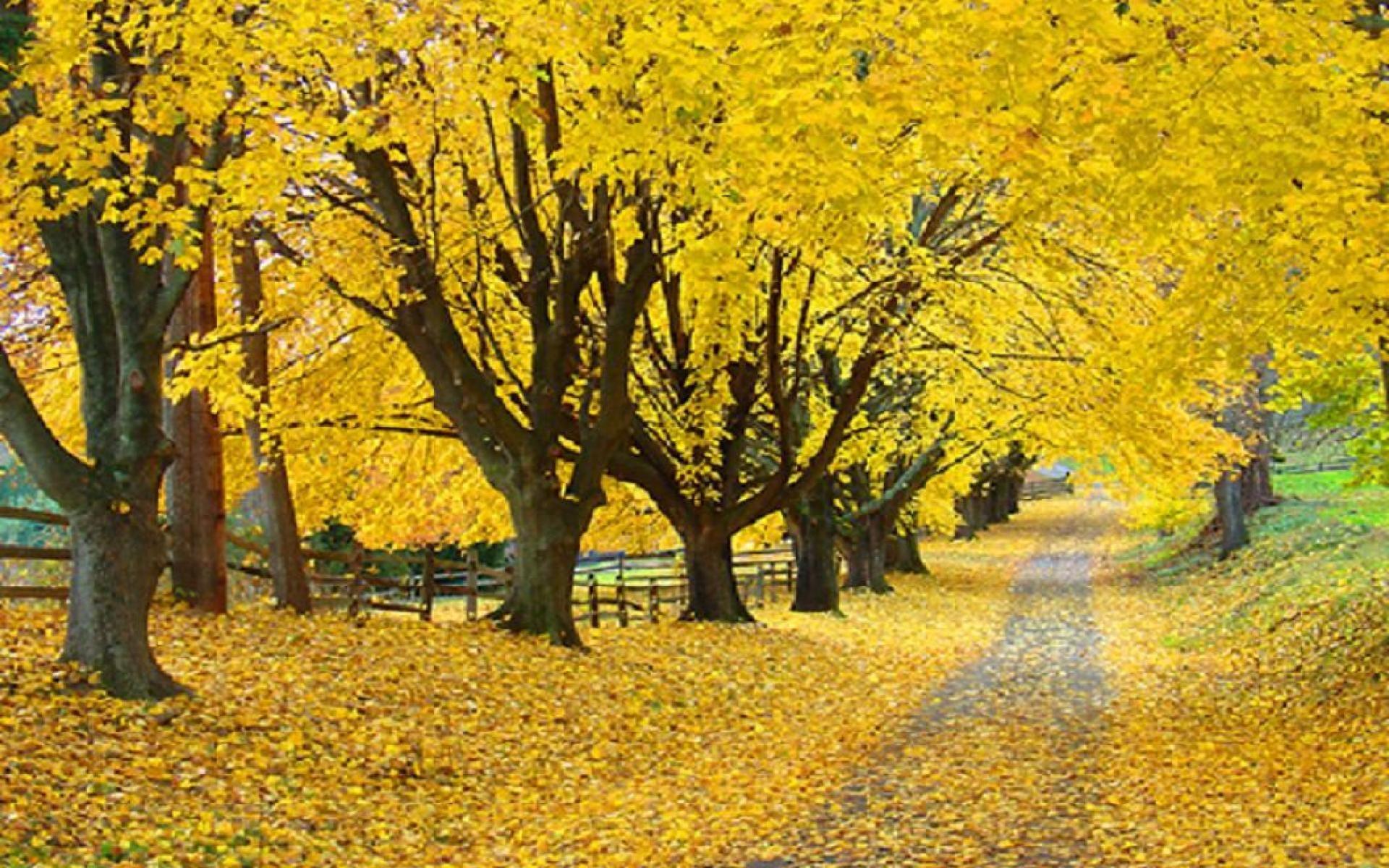 tree path track leaves - photo #33