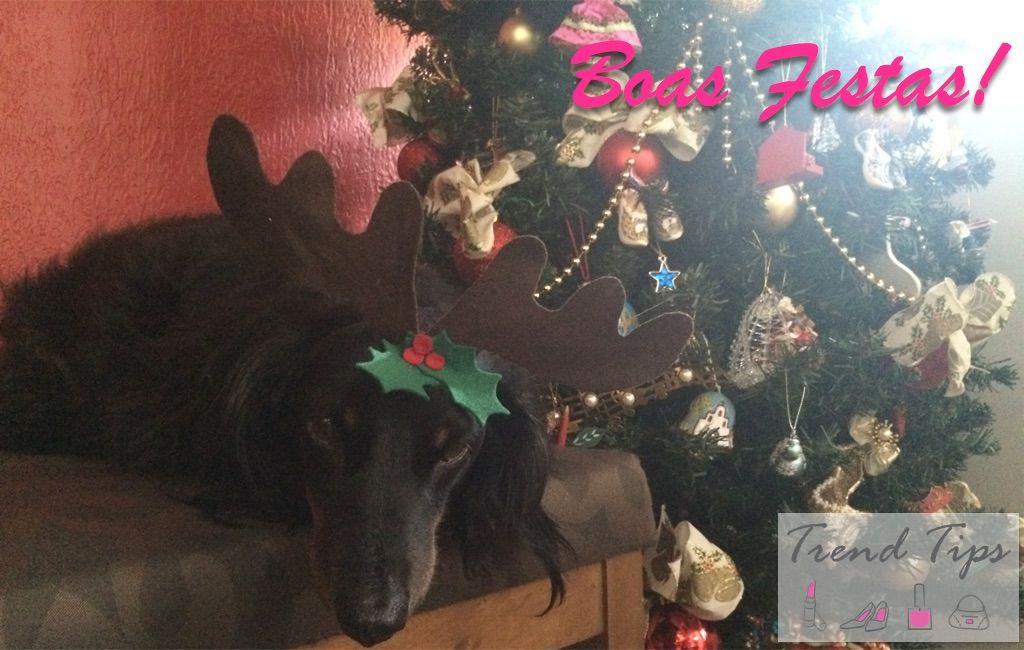 Boas Festas! #Daschund #Christmas #Natal #Cute #Pet #dog