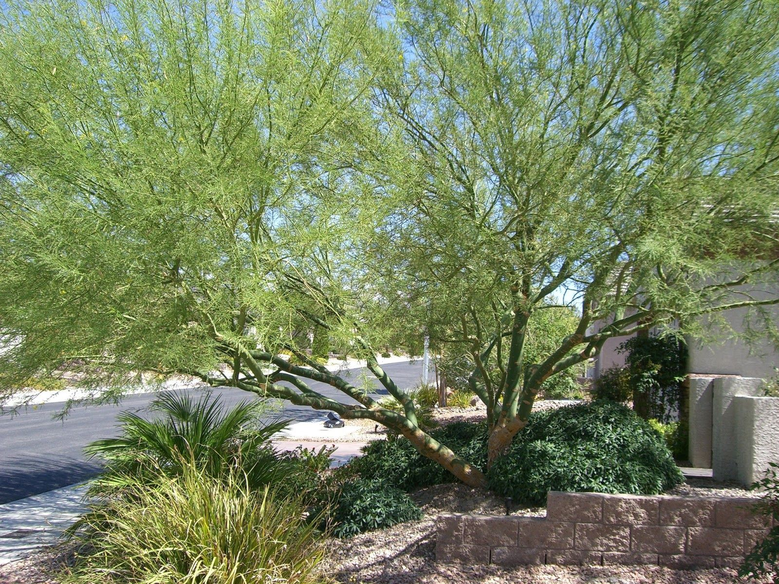 Awesome Desert Landscape Trees Combined With Cactus And Various Kind Of Desert Plants On The Smal Landscaping Trees Desert Landscaping Landscaping Around Trees