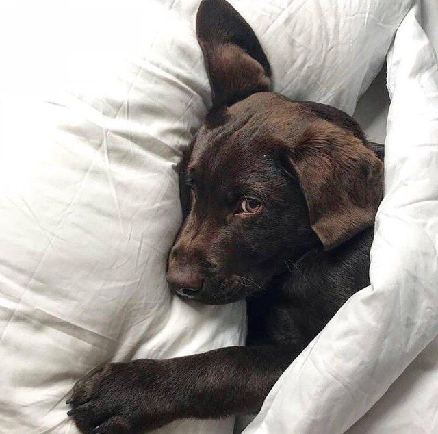 Is Your Dog Adorable We Ll Feature Your Dog On The Cutest Pup Pinterest Instagram 30k Followers Send Photo Www Cute Baby Animals Cute Dogs Puppies