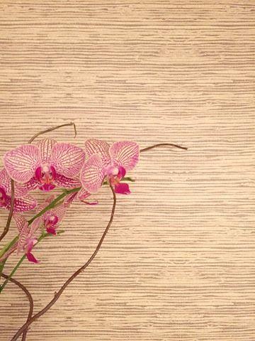 Peel Stick Grasscloth Wallpaper My Wayfair Video Emily A Clark Grasscloth Wallpaper Grasscloth Peel And Stick Wallpaper