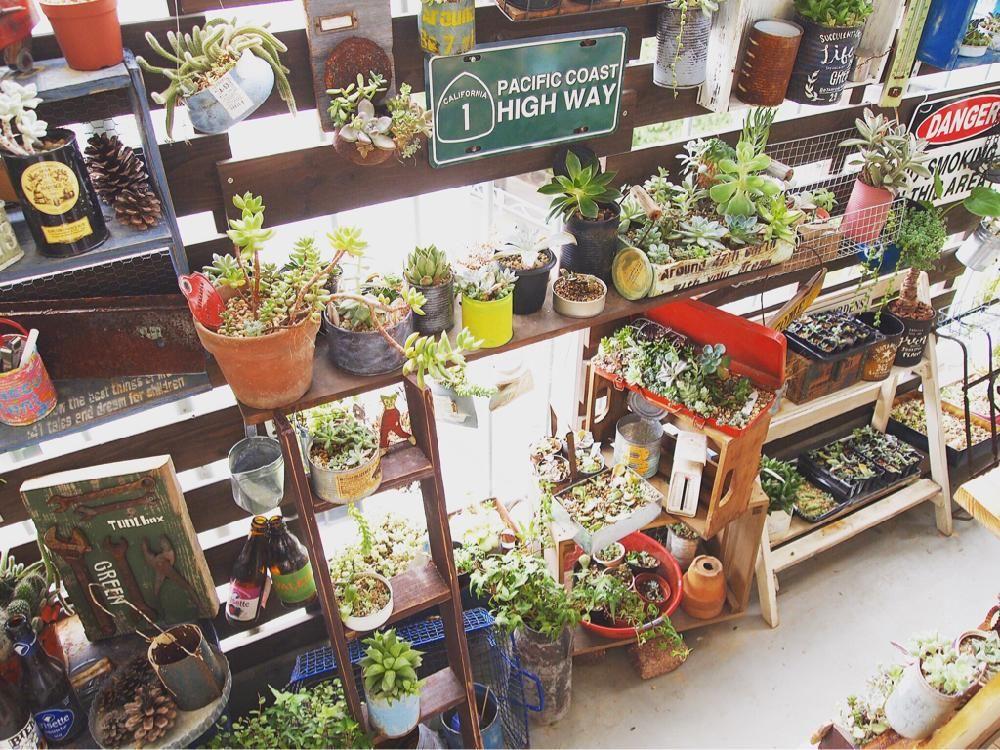 多肉植物の投稿画像 By Quintadena1213さん ベランダと多肉棚diyと