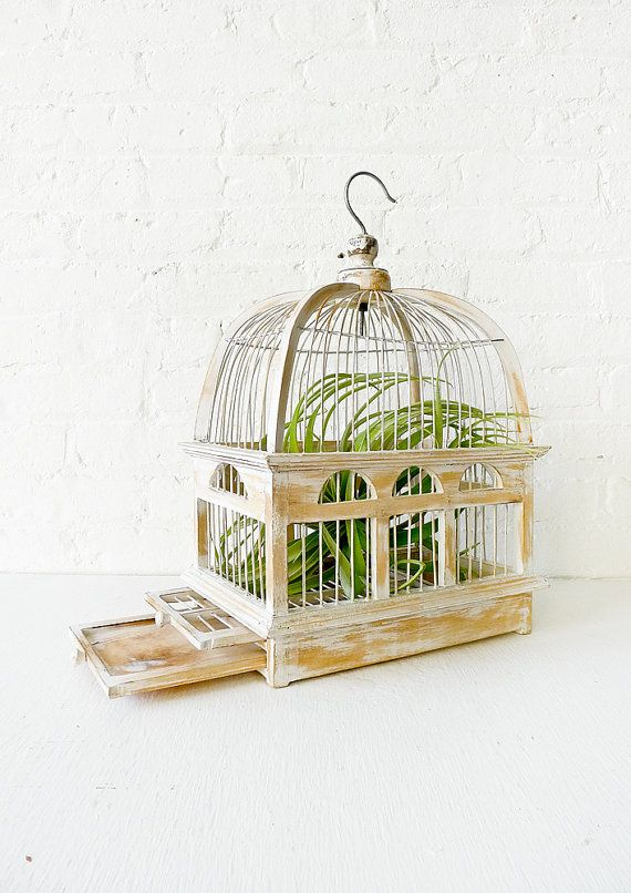 White Wash Bird Cage Air Plant Garden | For the Home | Air