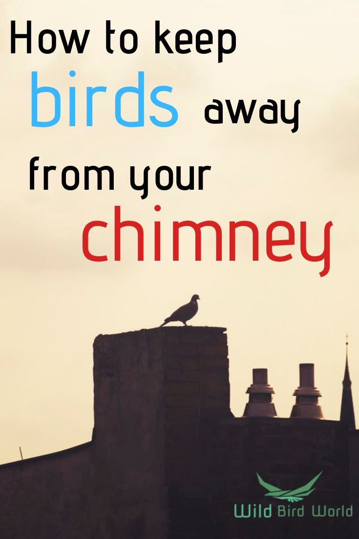 How To Get Birds Out Of A Chimney? in 2020 Keep birds