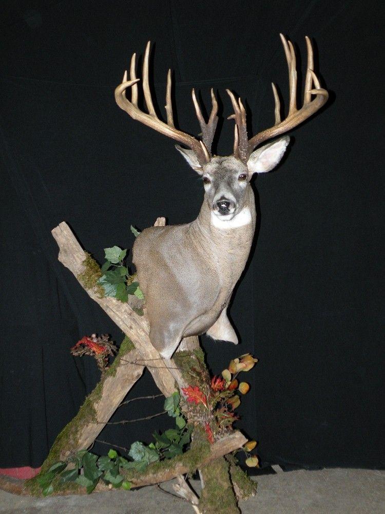 Interesting Floor Pedestal Mount Whitetail Deer Deer