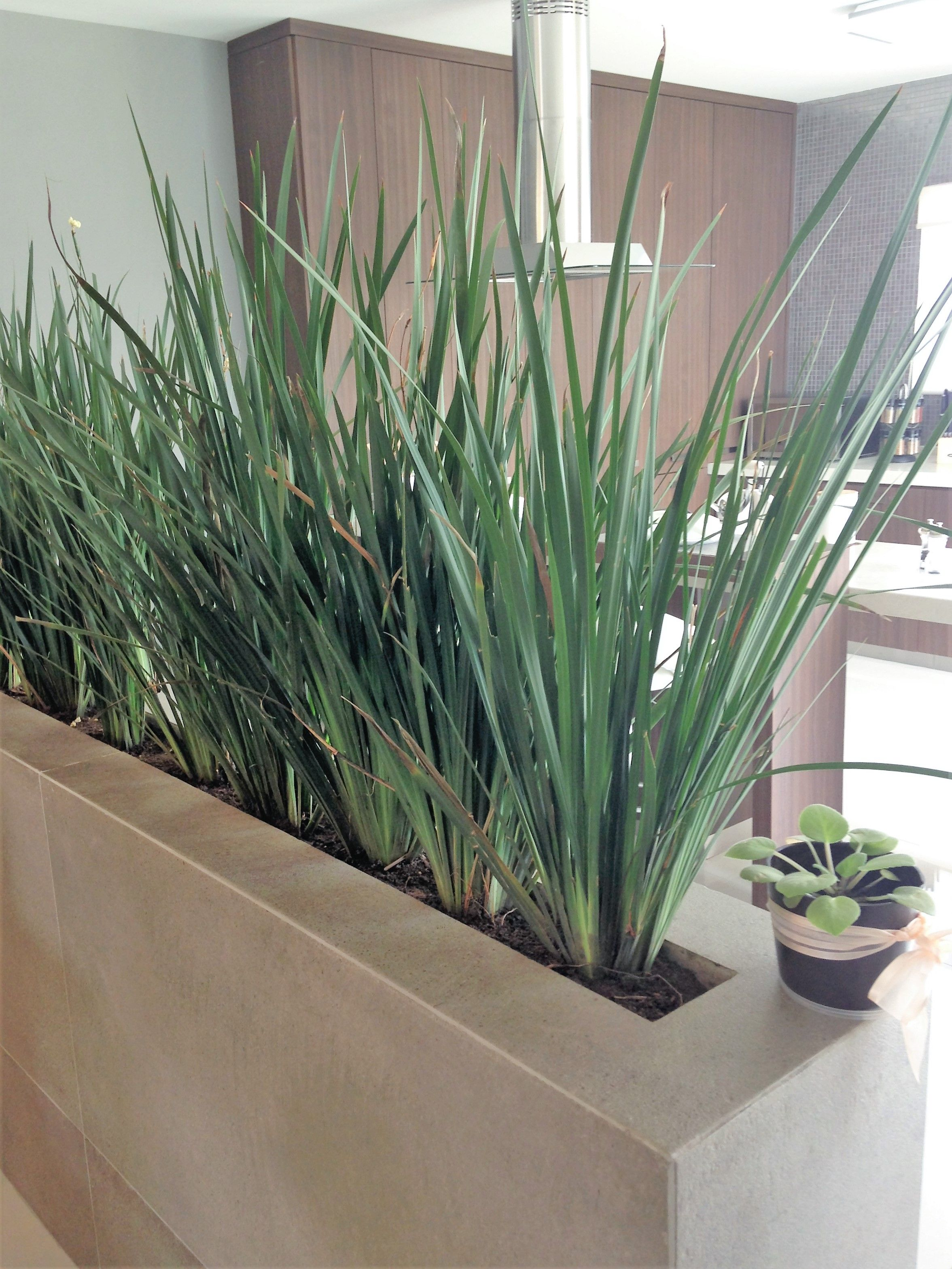 Jardinera interior para dividir un espacio casa for Planta arbustos para jardineras