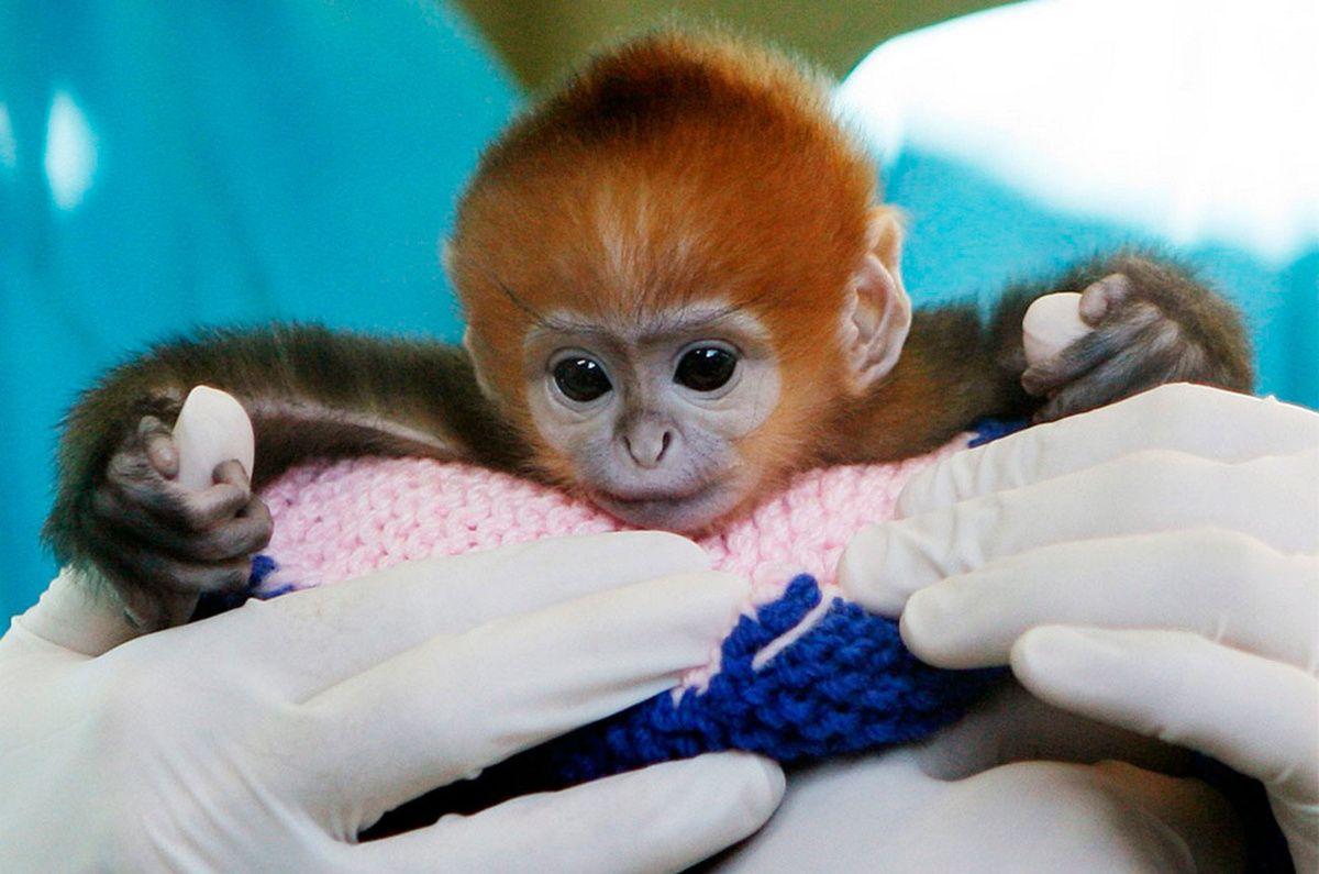 это картинка обезьянка в мире переезде меняется