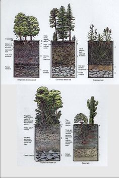 conceptlandscape profile of soil; soil is everythi