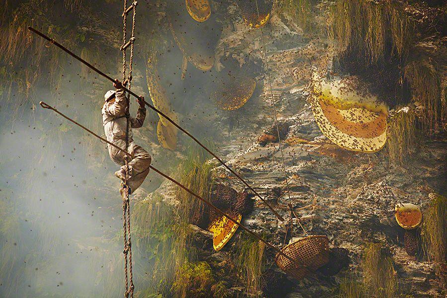 Gurung Honey Hunters - Andrew Newey
