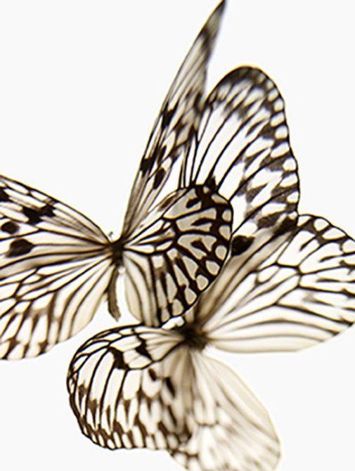 Glass like butterflies