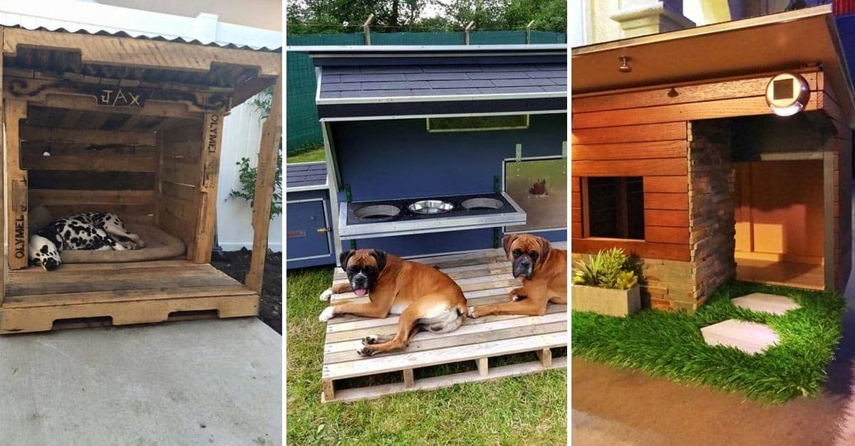 15 Brilliant Dog House Ideas and Designs (With images