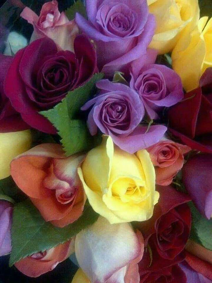 Pin By Manisha Kattare On Rozi Pretty Flowers Beautiful Roses Colorful Roses