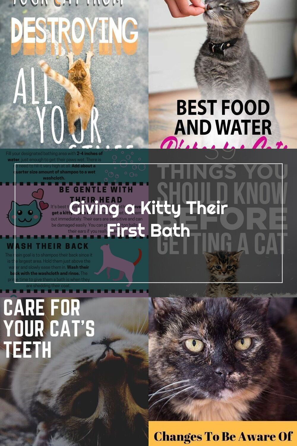Advice And My Experience Giving Your Kitty A Bath For The First Time Kitten Bath Pet Grooming Cat Kitty Tips Advice Sham In 2020 Cat Care Tips Cat Care Kitty