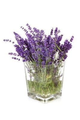 Bouquet Of Picked Lavender In Vase Over White Background Lavender Flowers Provence Lavender Lavender Garden