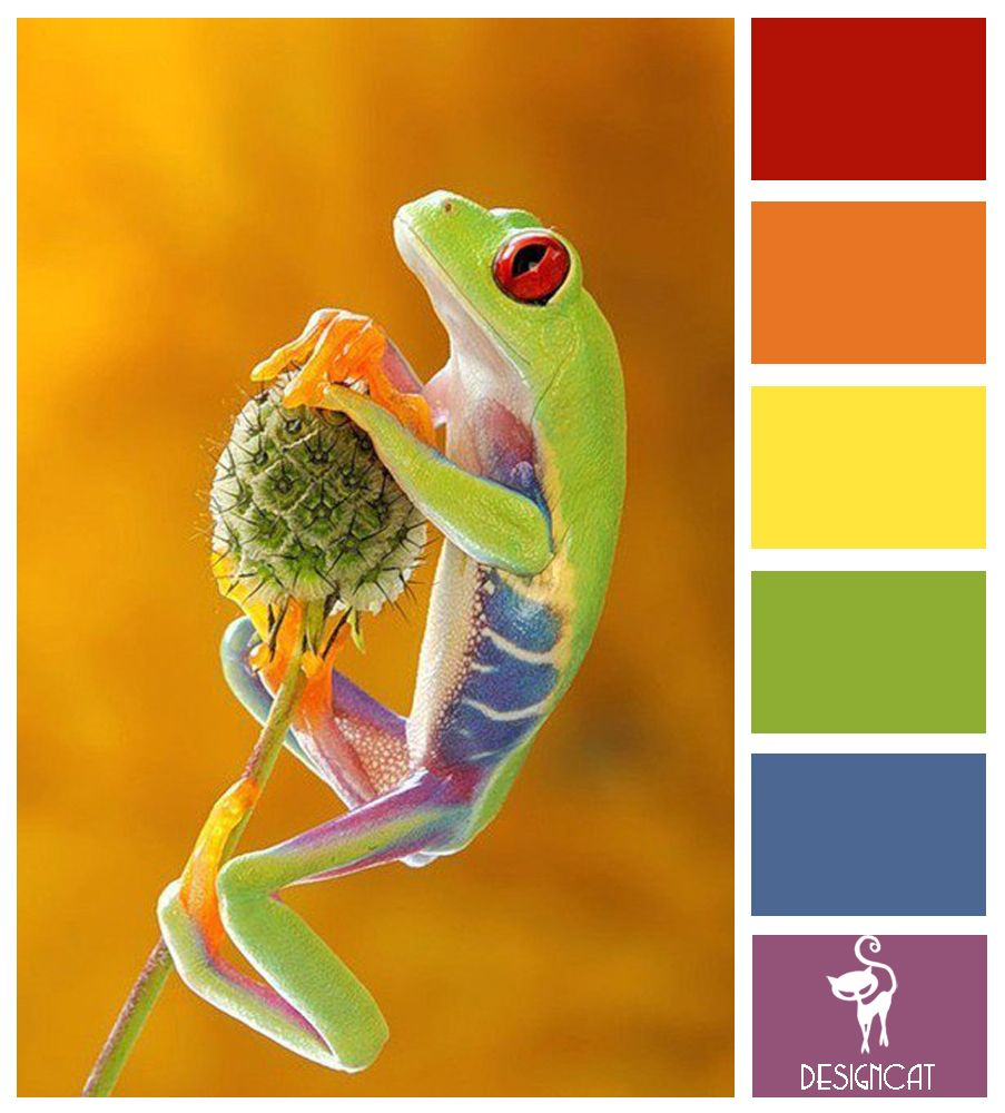 Orange Green Purple Room: Tree Frog: Red, Orange, Yellow, Green, Blue, Purple