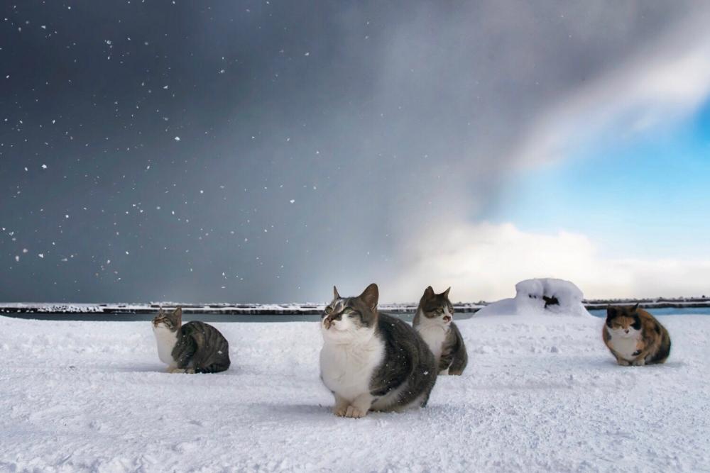 土肥美帆 猫の写真集発売中 On Twitter In 2021 Cute Cats And Dogs Cute Cats Snow Dogs
