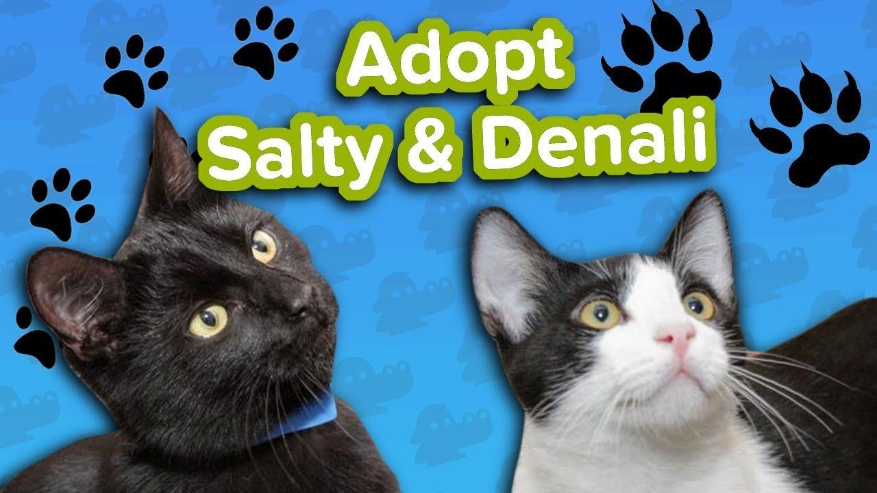 Adopt Denali and Salty SPCA Adoptable Featurette