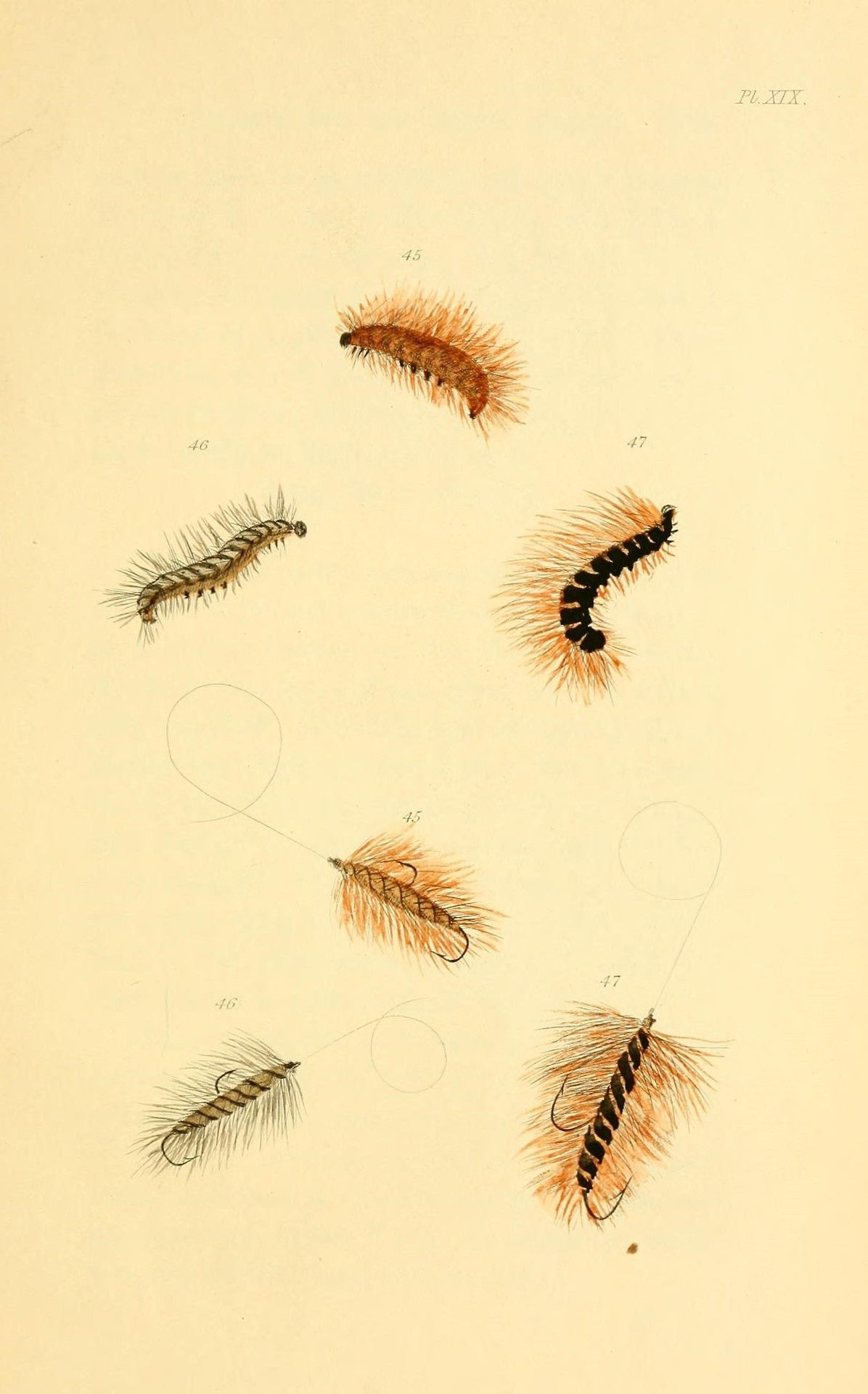 The fly-fisher's entomology; 1901