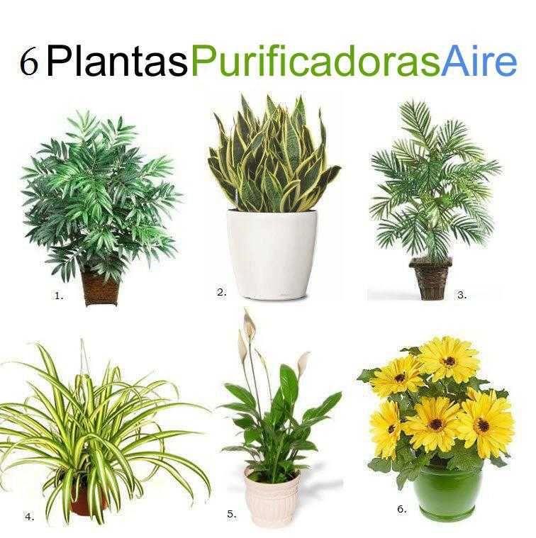6 plantas de interior que purifican el aire | Plantas arañas, Lirio ...