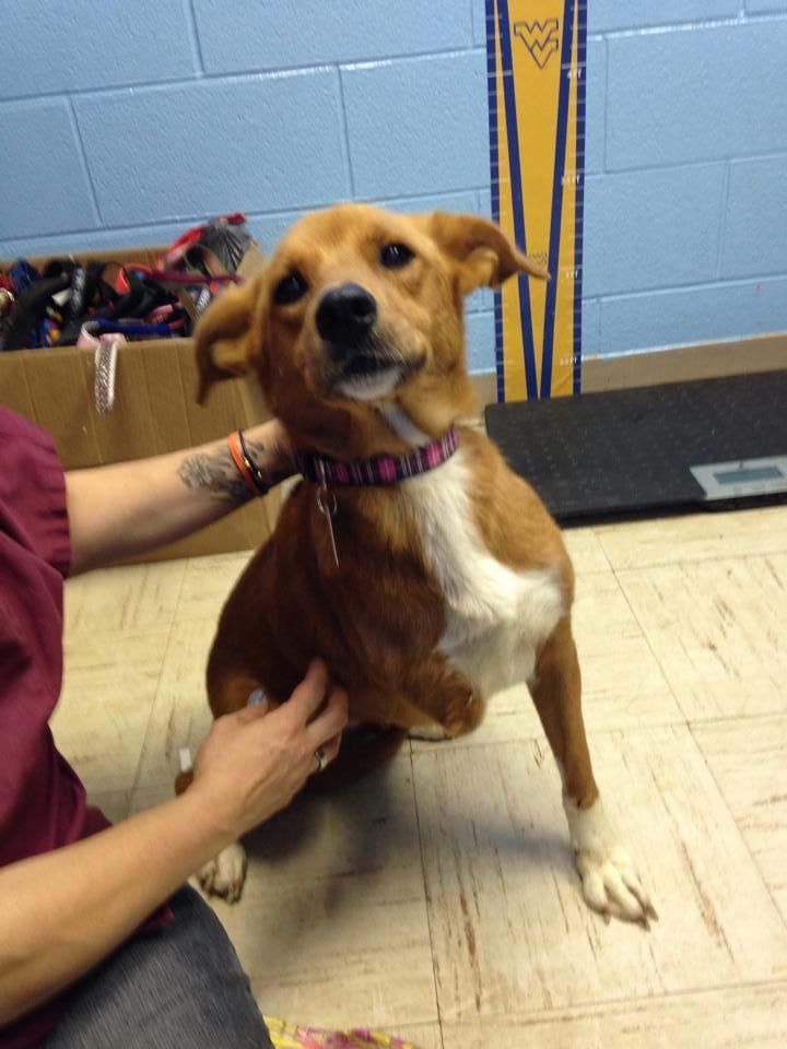 Adopt Ruthie 3 Legs On Petfinder Dog Adoption Dogs Adoption