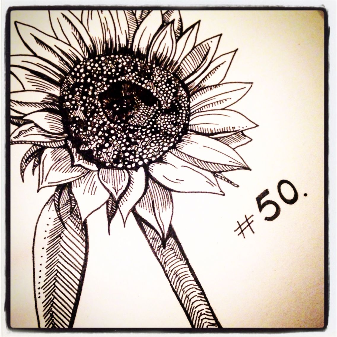 Sunflower th of february daily drawing inprint daily