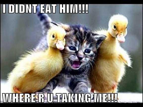 Cute Funny Memes For Him : I didn t eat him cameron on pulse fm tweet cameronecu