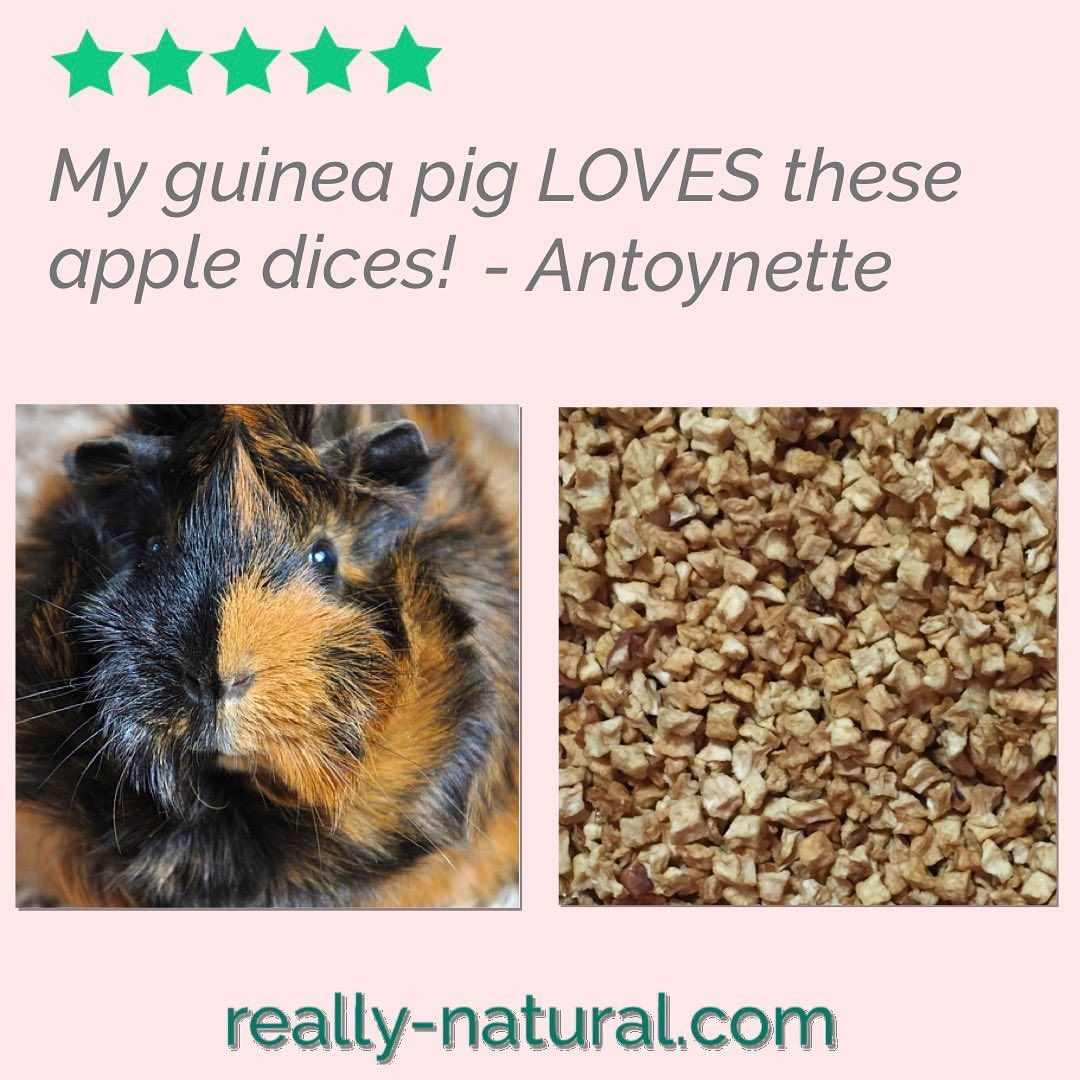 Really Natural Pet Products On Instagram Yummy Healthy Dried Apple Loved By Pets And Their People Perfectly Port In 2020 Small Pets Natural Pet Food Animals