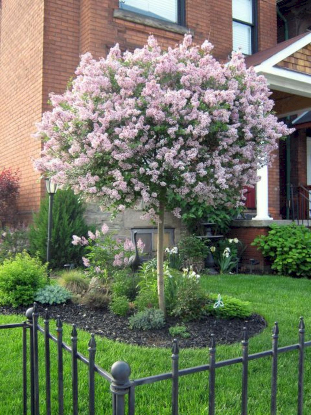 15 of the Best Trees for Any Backyard   Backyard trees