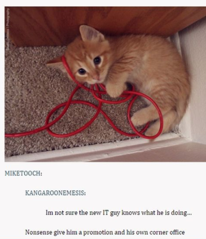 100 Tumblr Posts About Puppies And Kittens That'll Make Your Day Instantly Better -  [incoherent high-pitched squealing]  - #about #better #Day #DogLovers #DogsandPuppies #instantly #kittens #posts #puppies #Thatll #tumblr