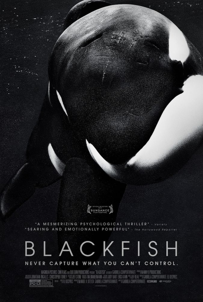 Blackfish I Grew Up Loving Sea World But Now Looking At It Like This I Have A Different View Blackfish Movie Blackfish Blackfish Documentary
