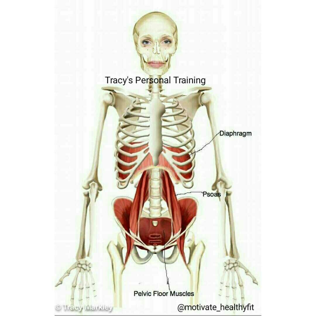 The Diaphragm, The Pelvic Floor, The Psoas Muscle | Tracy\'s Personal ...