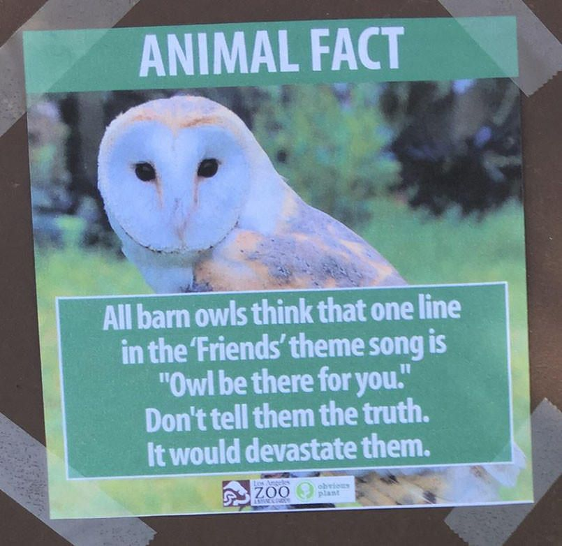 Man sneaks into zoo, replaces signs with funny animal facts