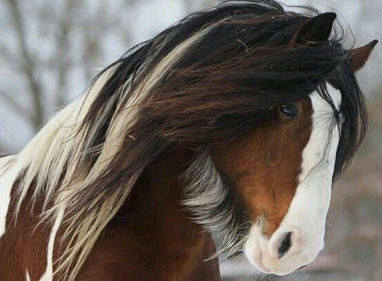 Pin Von Anna Kleve Auf Murkels Tinker Pferd Pferde Pferdebilder