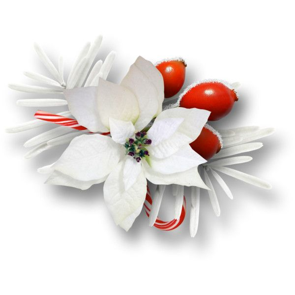 fleurs,tube,flowers,png,noel ❤ liked on Polyvore featuring christmas, flowers, backgrounds, winter, fillers and effect