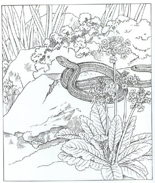 Coloring Pages For Adults Realistic Animals Google Search Coloring Pages Nature Mandala Coloring Books Coloring Pages