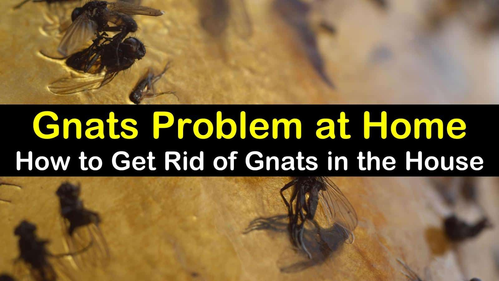 2 Fast & Easy Ways to Get Rid of Gnats in the House (With ...