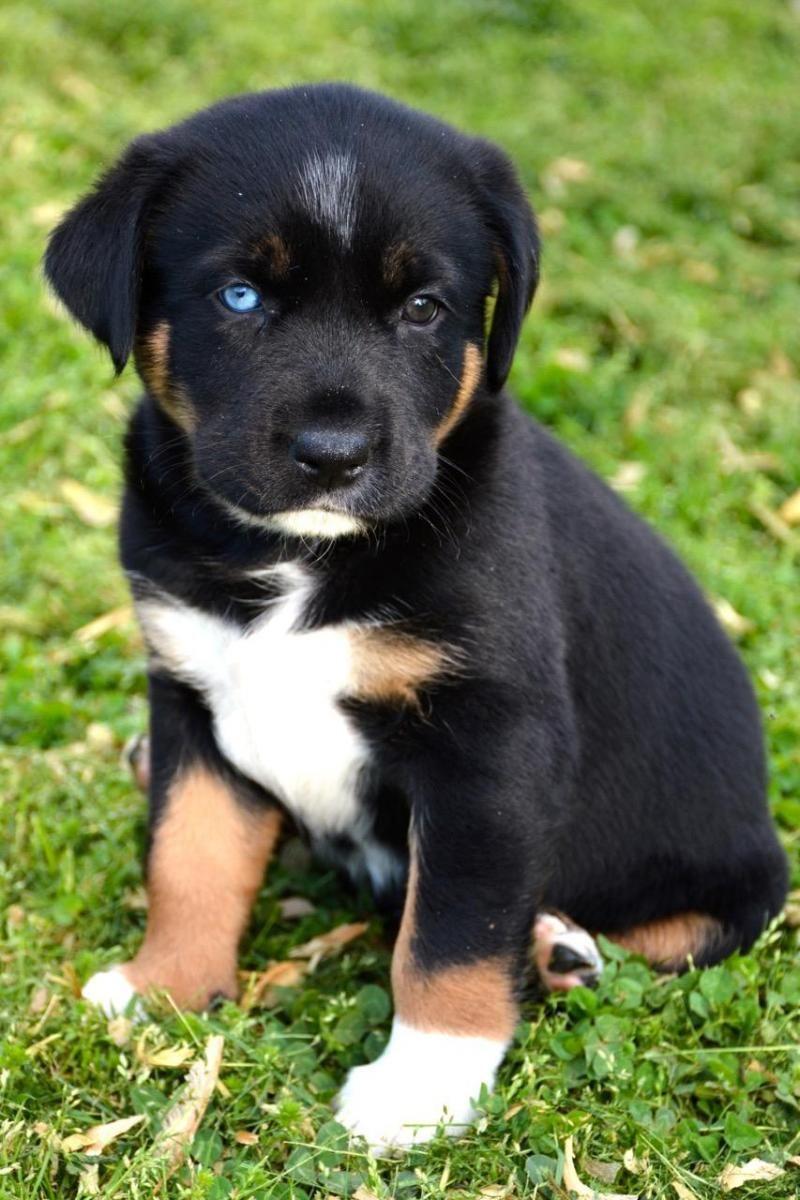 Adopt Brella On Dog Breeds Puppies Pet Dogs