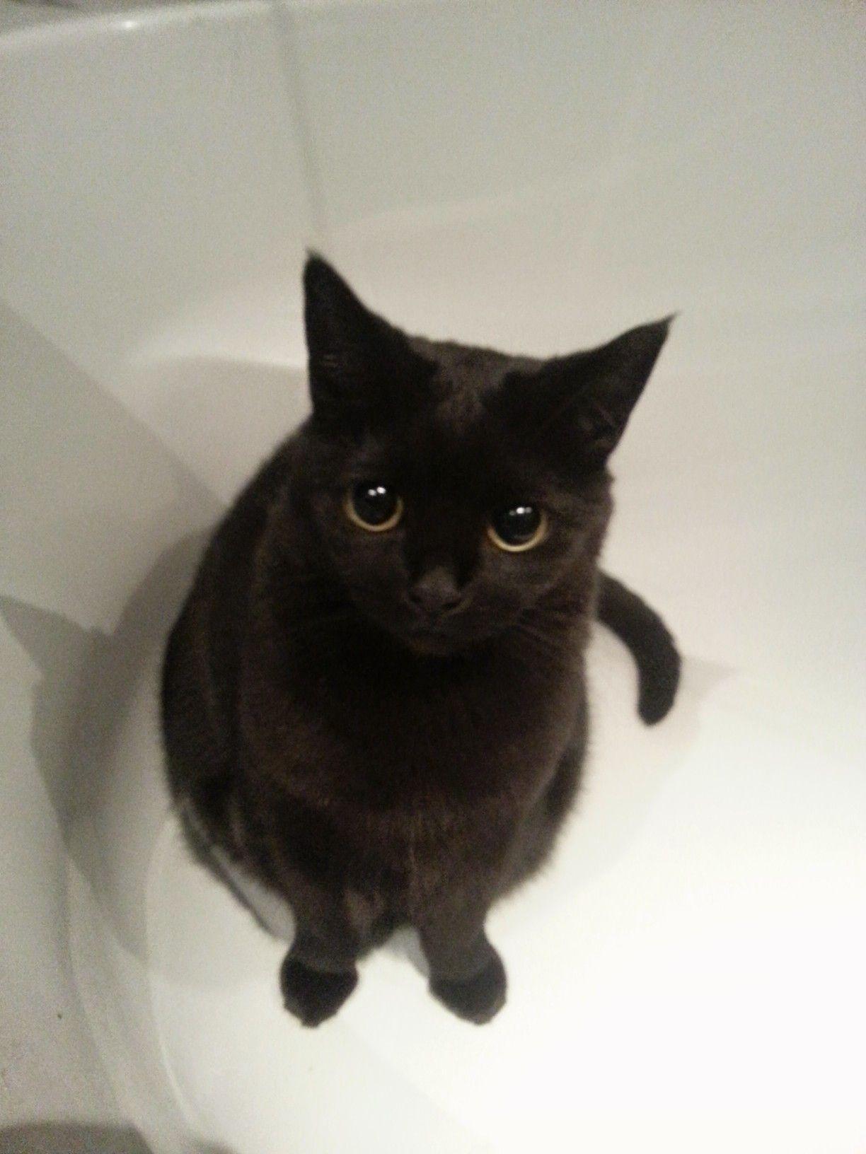 Please.....black cat Cute cats, Cats, Cat aesthetic