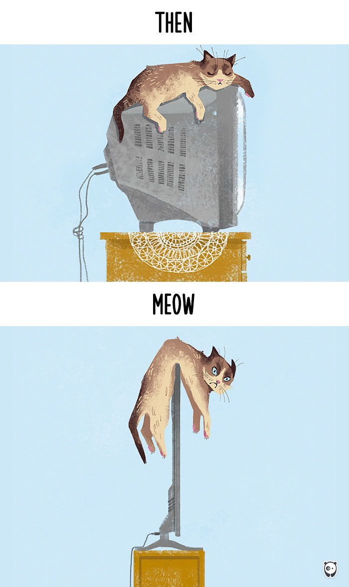 Then vs Meow, or how technology has changed cats' lives.