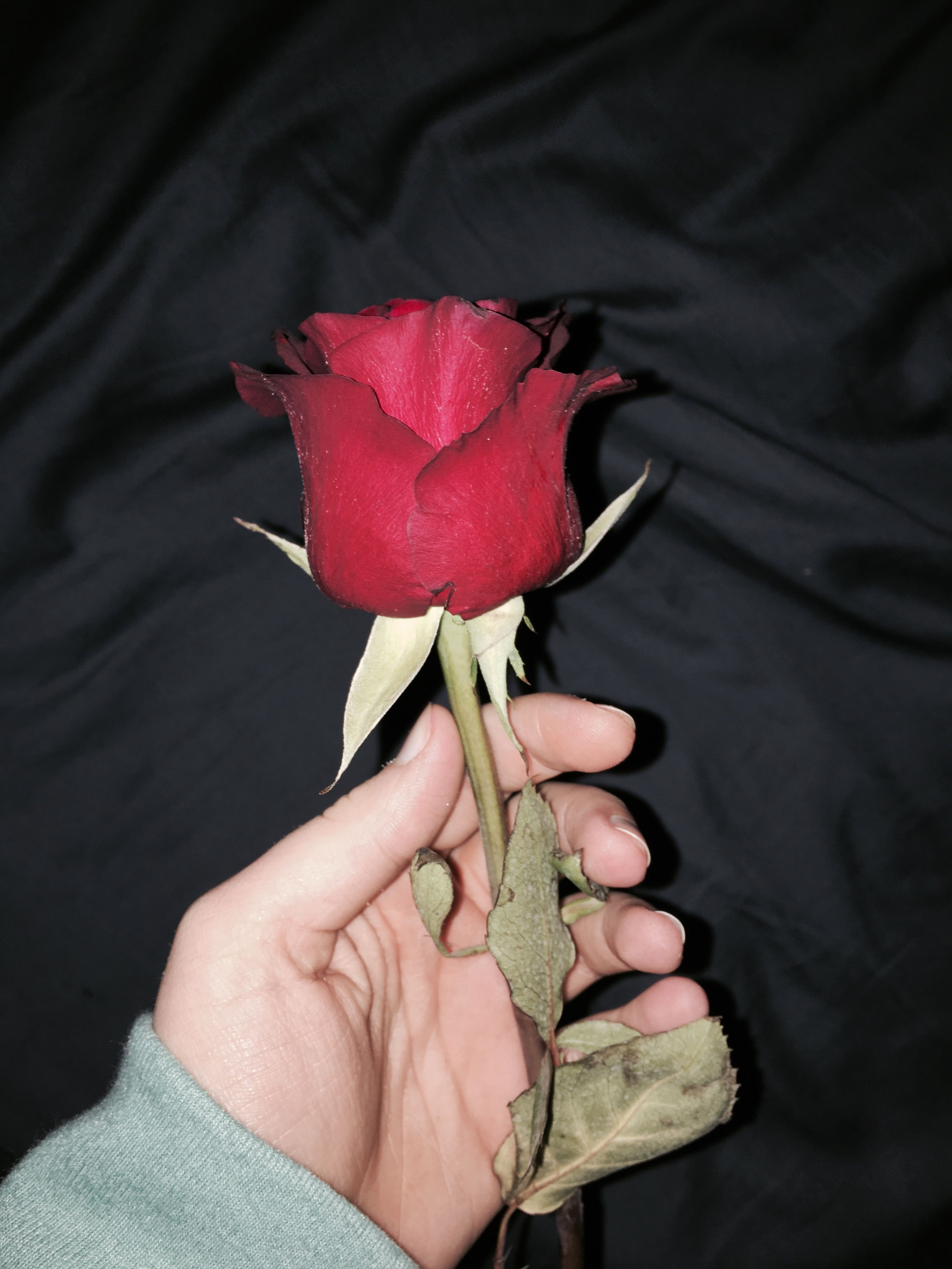 Rose Red Dark Grunge Aesthetic Photography Tumblr