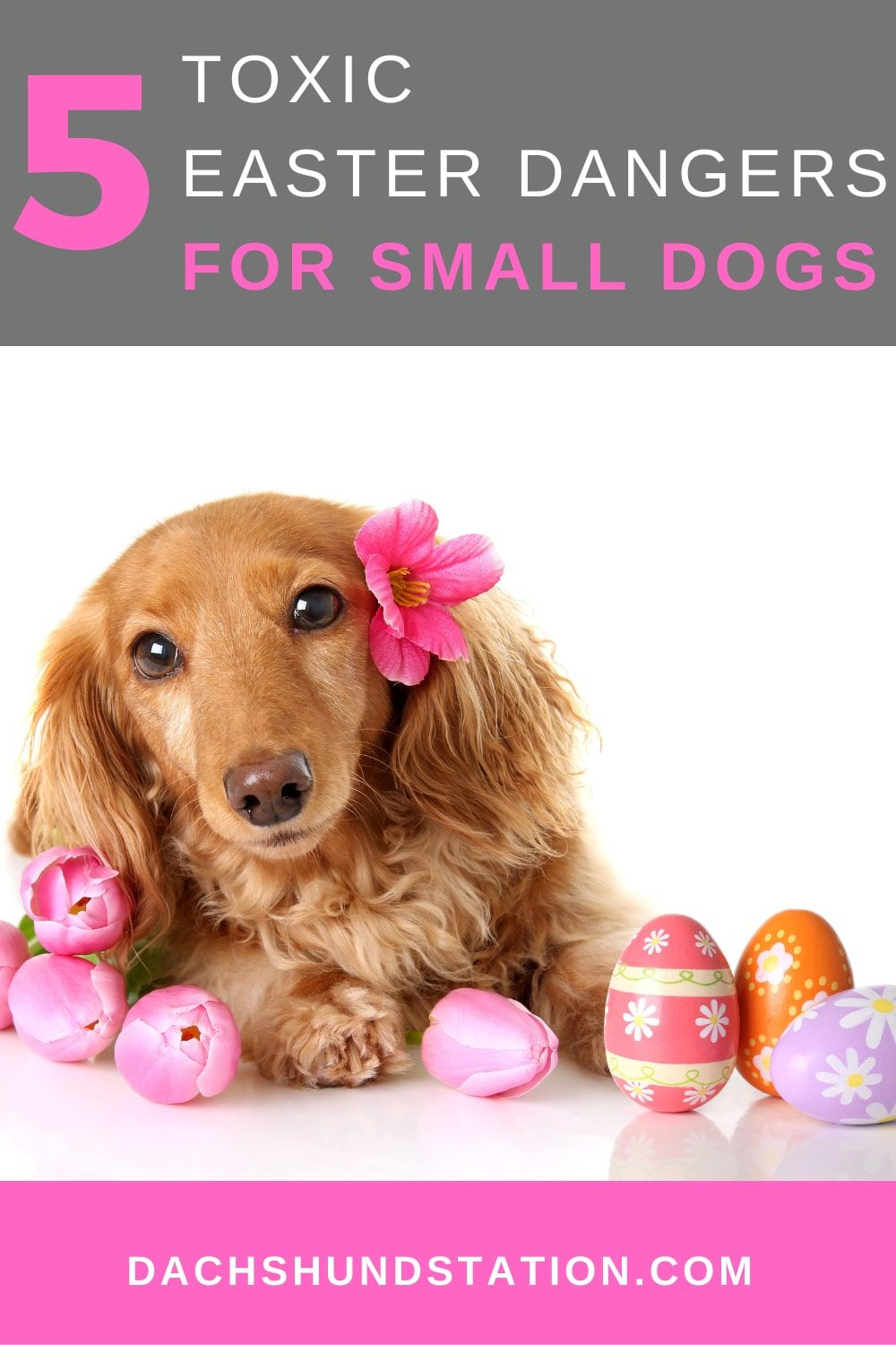 5 Toxic Easter Dangers For Small Dogs Small Dogs Toxic Foods