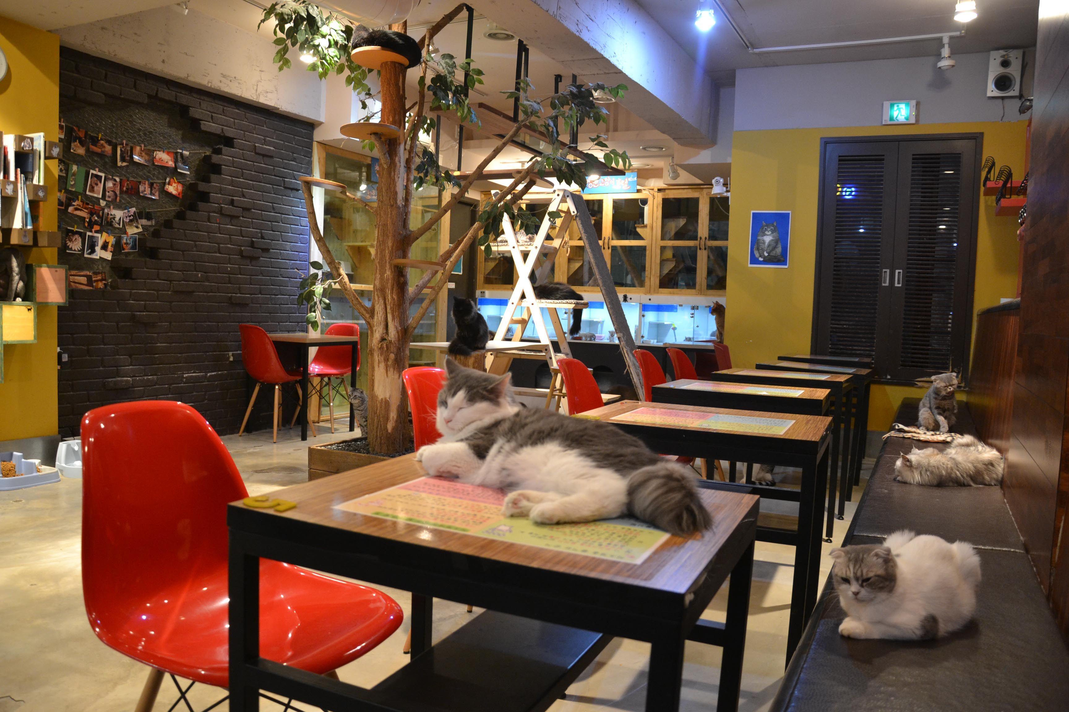 Cat cafe, Seoul Cat cafe, Cafe, Mood board