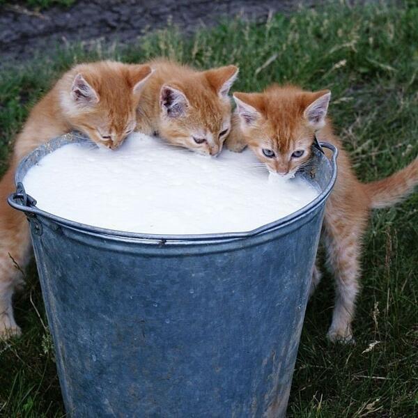 Thirsty Kittens!