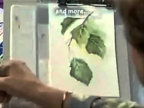 """Susan Scheewe 2 Hour Workshop DVD """"Watercolor Painting Techniques"""": Video Excerpt"""