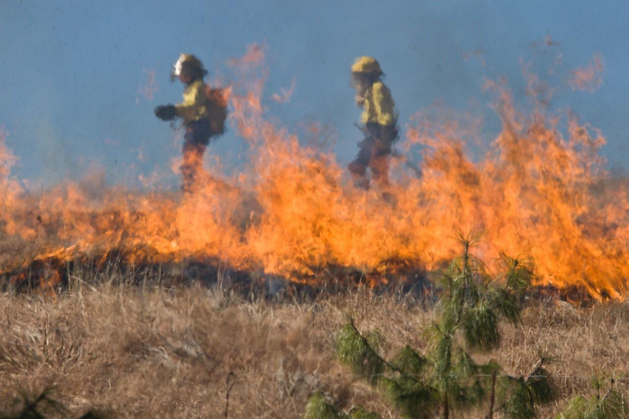 California Public Adjuster Bond Fire Forest Service Grants