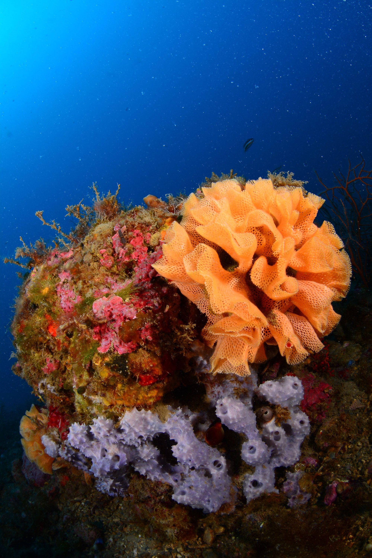 E3449d53d8bdbf17ffdc73fd9b8fc8e3 Jpg 2 000 3 000 Pixels Ocean Animals Underwater Life Undersea World
