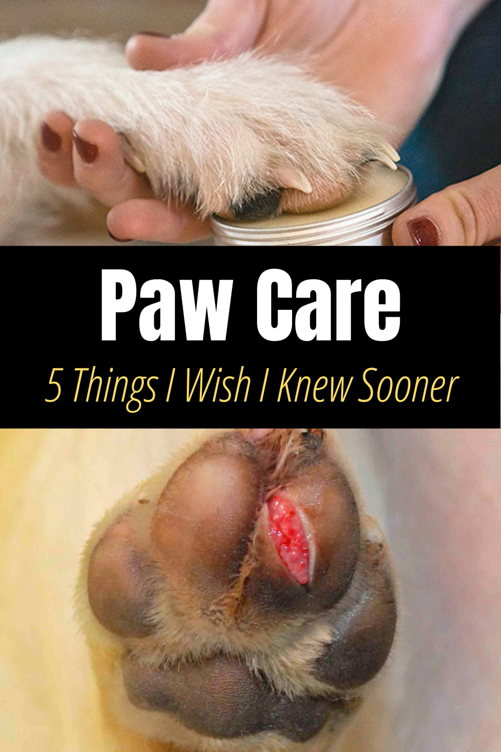 5 Paw Care Tips You D Wish You D Known Sooner Video In 2020 Paw Care Dog Paw Pads Dog Paw Care