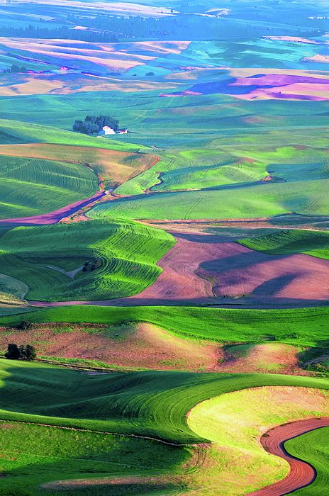 rolling hills and fields taken from steptoe butte county park whitman county washington farms green hills lentils beautiful nature beautiful landscapes palouse rolling hills and fields taken from