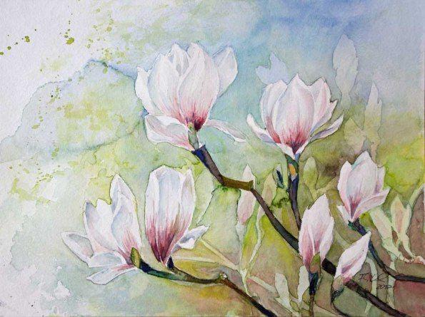 magnolien blüten als frühlingsboten c aquarell von frank